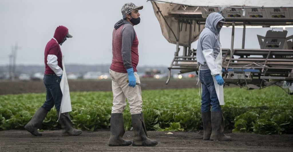 As Covid-19 cases spike, an unprecedented alliance emerges to protect California farmworkers