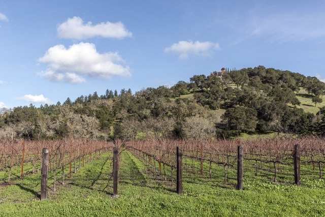Clues From Wines Grown in Hot, Dry Regions May Help Growers Adapt to a Changing Climate