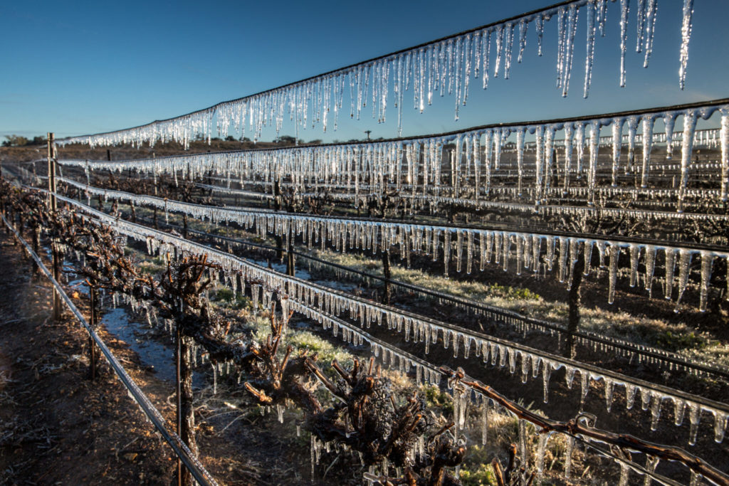 Ice-fighting Bacteria Could Help California Crops Survive Frost